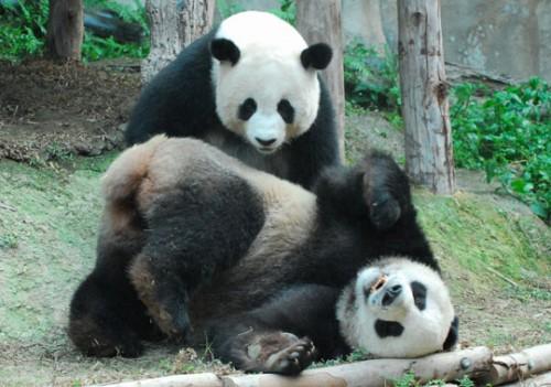 panda_dieta2.jpg
