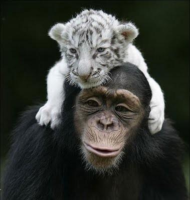 Predatori in pantofole (l'articolo completo sul sito) dans amici animali amici veri 1377156054