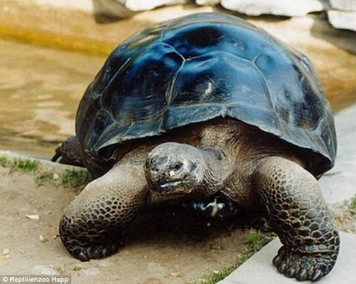 animali, notizie divertenti, notizie strane, notizie commoventi, tartarughe, rettili, divorzio tra animali, tartarughe divorziate