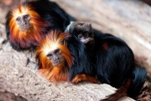 scimmia_mamma-adottiva2.jpg