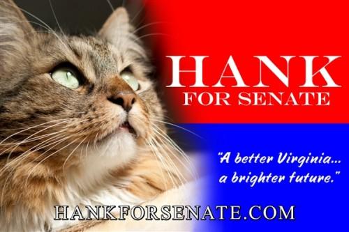 cat_senate_0.jpg
