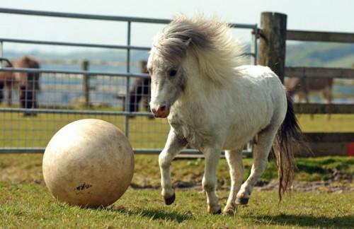 pony_calcio1.jpg