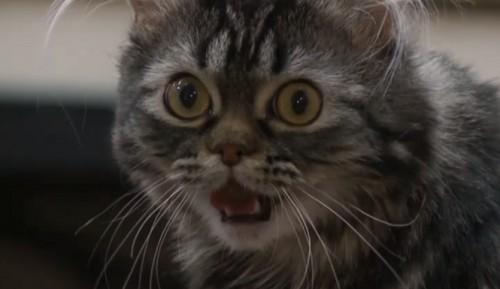 notizie animali,notizie divertenti,notizie strane,notizie commoventi,gatti,gatti paralizzati,gatti in carrozzella,carrozzella robotica