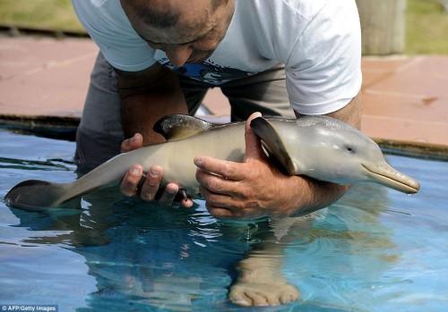 delfino_cucciolo1.jpg