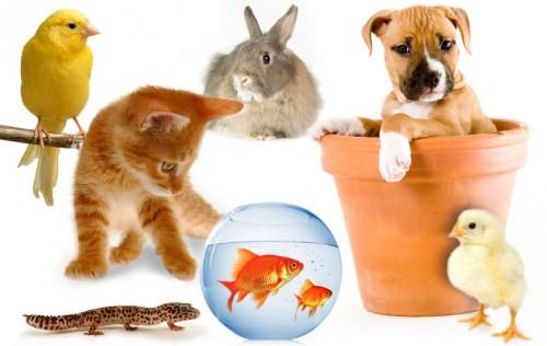 otizie animali, notizie divertenti, notizie strane, notizie commoventi, GoGreen, L'Arresto del Carlino e GoGreen, ambiente