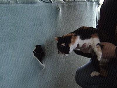 Gatto ritrovato dentro un divano di seconda mano l for Seconda mano mobili