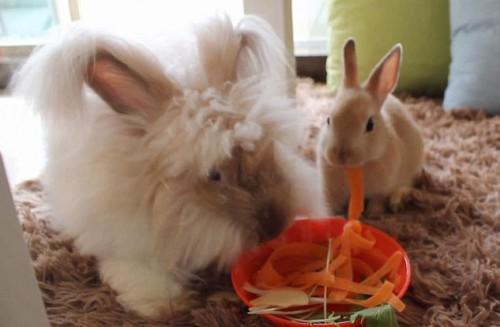 notizie animali, notizie divertenti, notizie strane, notizie commoventi, conigli domestici, Bunny Café, locali pubblici e animali dimestici