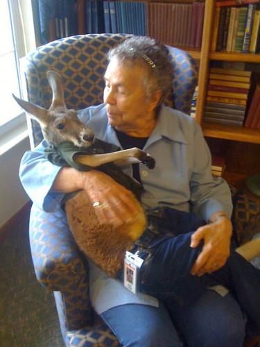 notizie animali,notizie divertenti,notizie strane,notizie commoventi,canguri,canguro paralizzato,pet therapy,canguro therapy