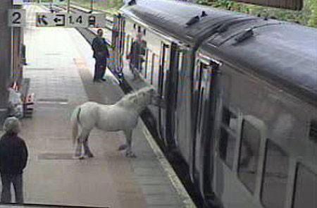 notizie animali, notizie divertenti, notizie strane, notizie commoventi, cavalli, pony, mezzi pubblici e animali, animali sui treni