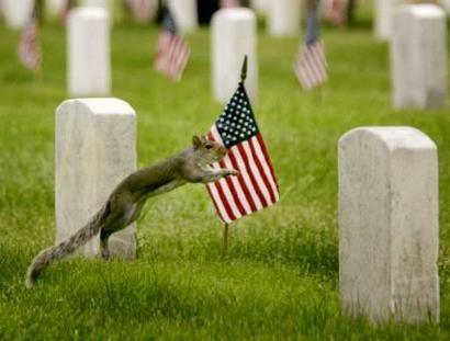 scoiattolo_bandiere.jpg